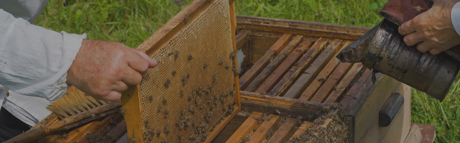 RPC Bee & Wasp Removal | Bee Hive Pollination