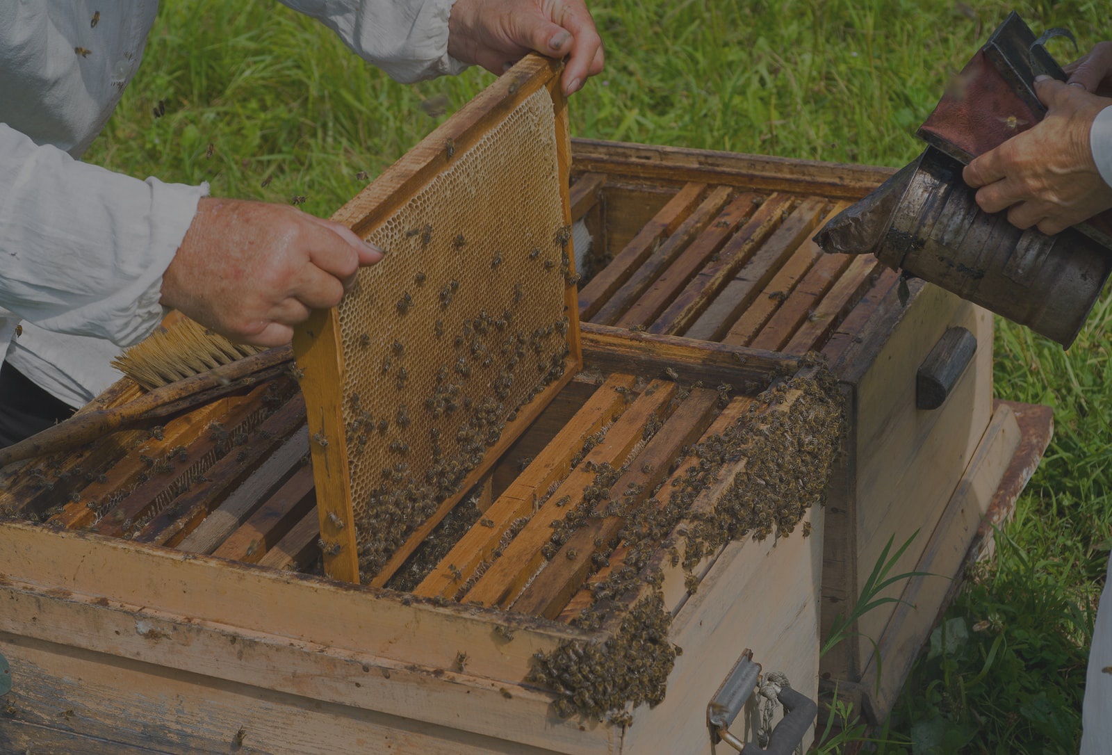 Bee Hive Pollination