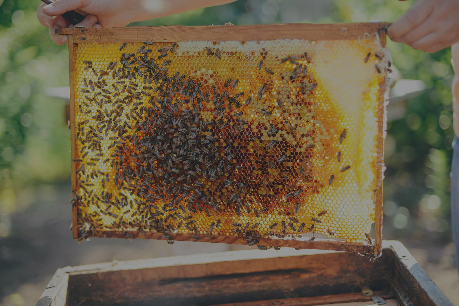 Bee Hives For Sale