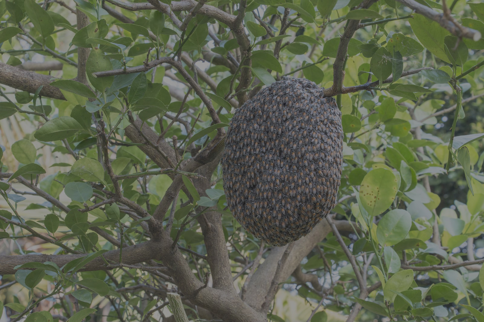 Bee & Swarm Removal
